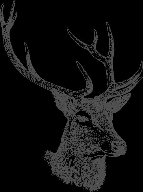 Mein Adventskalender Logo
