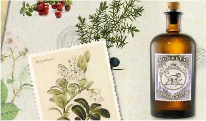 Bild Monkey 47   Kult Gin Aus Dem Schwarzwald