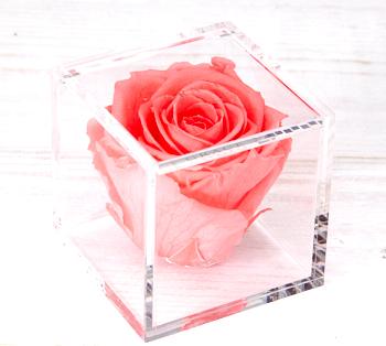 Inhalt Grace Flowerbox Adventskalender 2020
